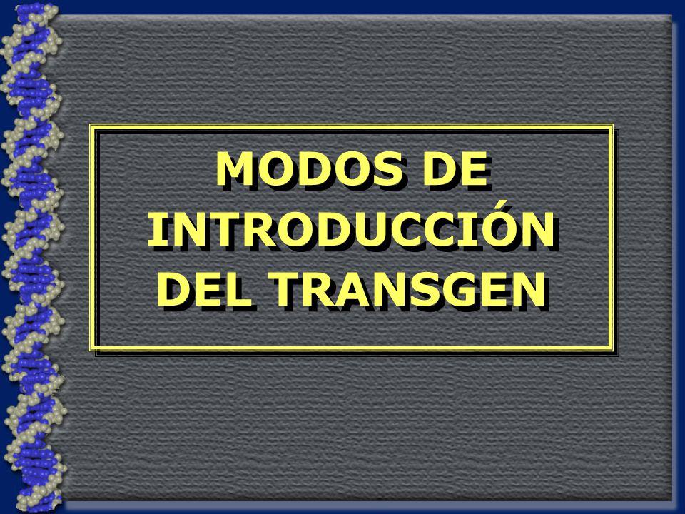 MODOS DE INTRODUCCIÓN DEL TRANSGEN