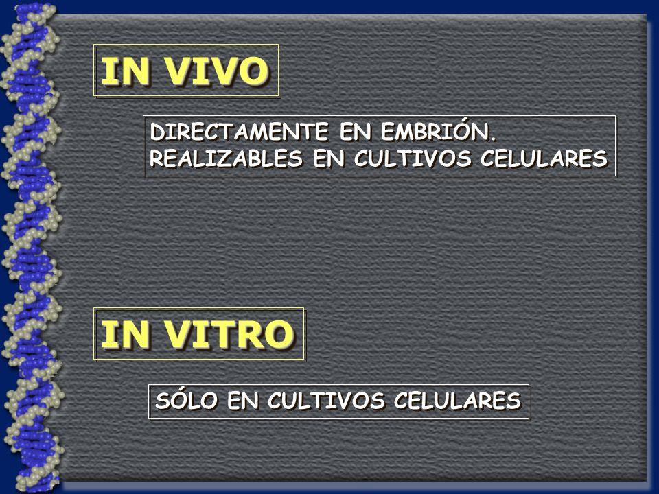 DIRECTAMENTE EN EMBRIÓN.REALIZABLES EN CULTIVOS CELULARES DIRECTAMENTE EN EMBRIÓN.