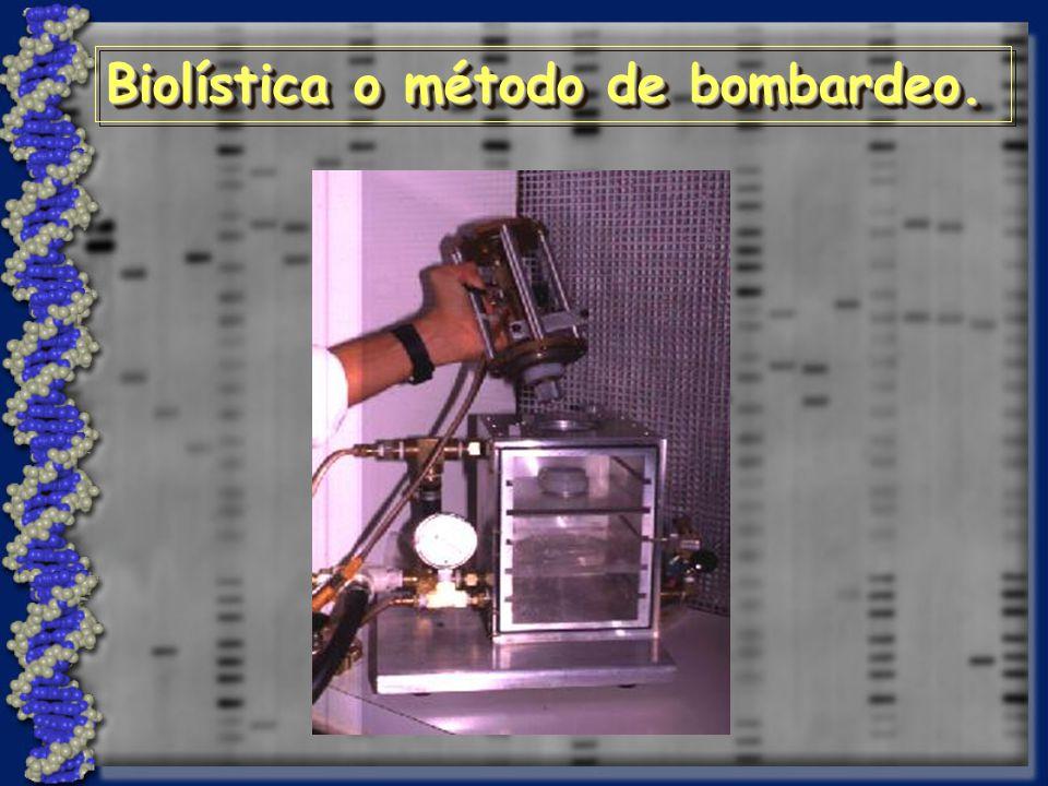 Biolística o método de bombardeo.