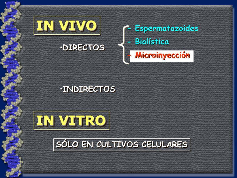 IN VIVO IN VITRO SÓLO EN CULTIVOS CELULARES DIRECTOS INDIRECTOS - Espermatozoides - Biolística - Microinyección - Espermatozoides - Biolística - Microinyección