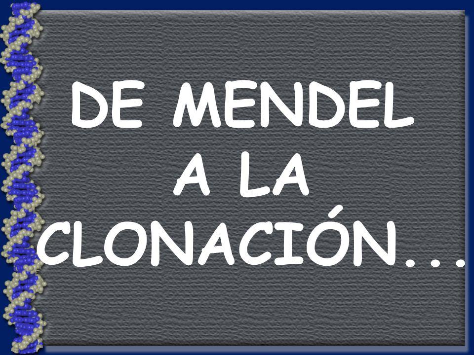 DE MENDEL A LA CLONACIÓN...