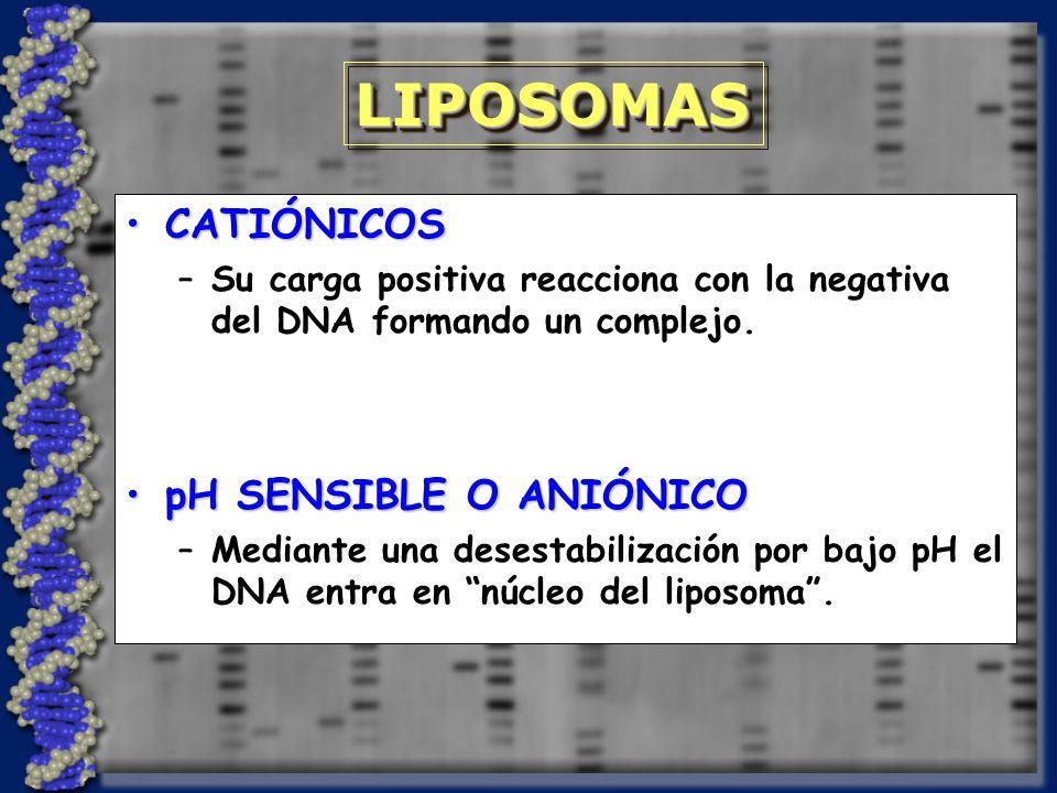 CATIÓNICOSCATIÓNICOS –Su carga positiva reacciona con la negativa del DNA formando un complejo.
