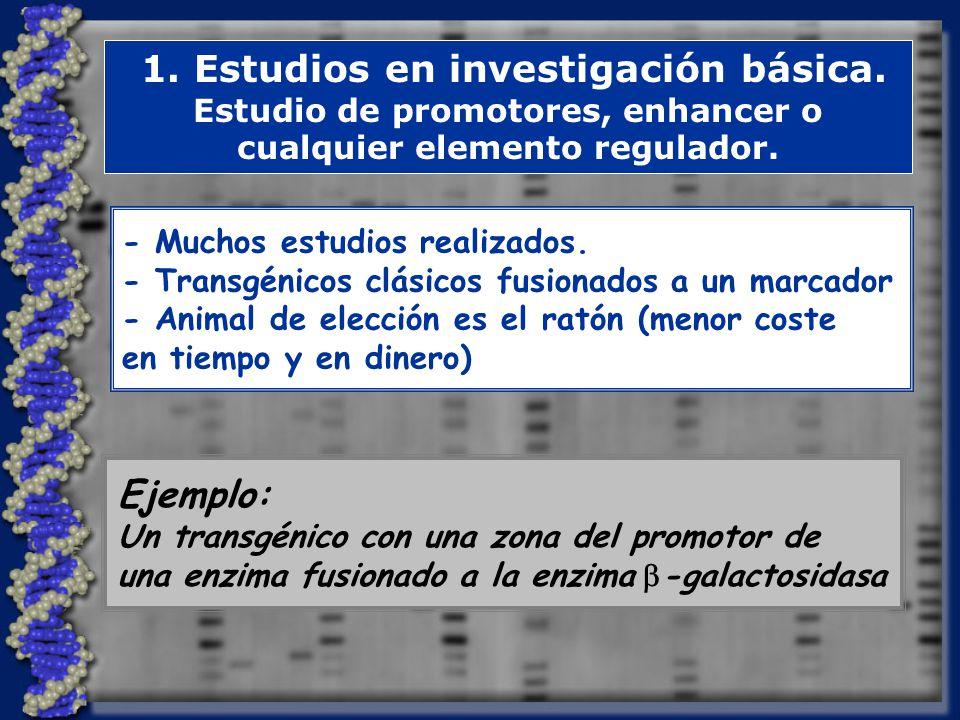 1.Estudios en investigación básica.