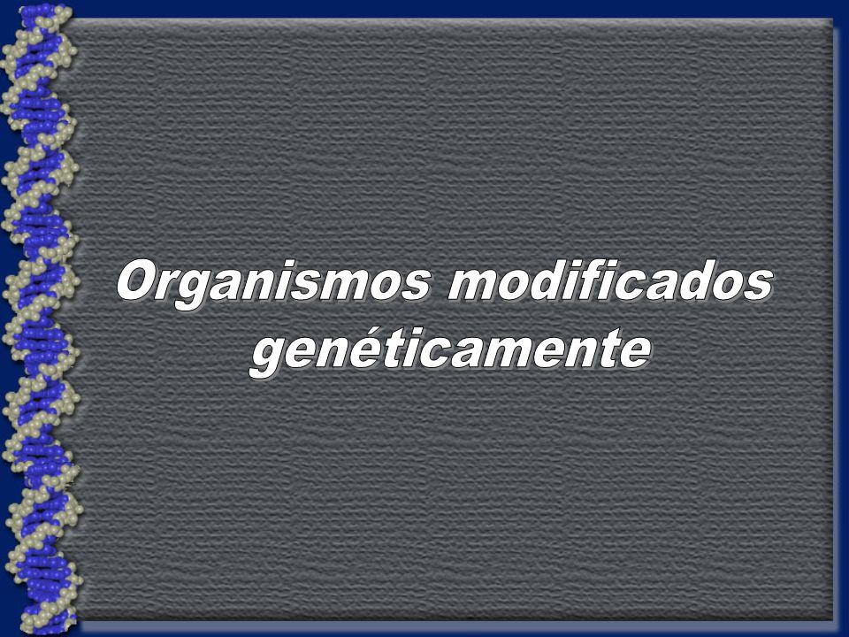 ¿ Qué son los organismos modificados genéticamente.