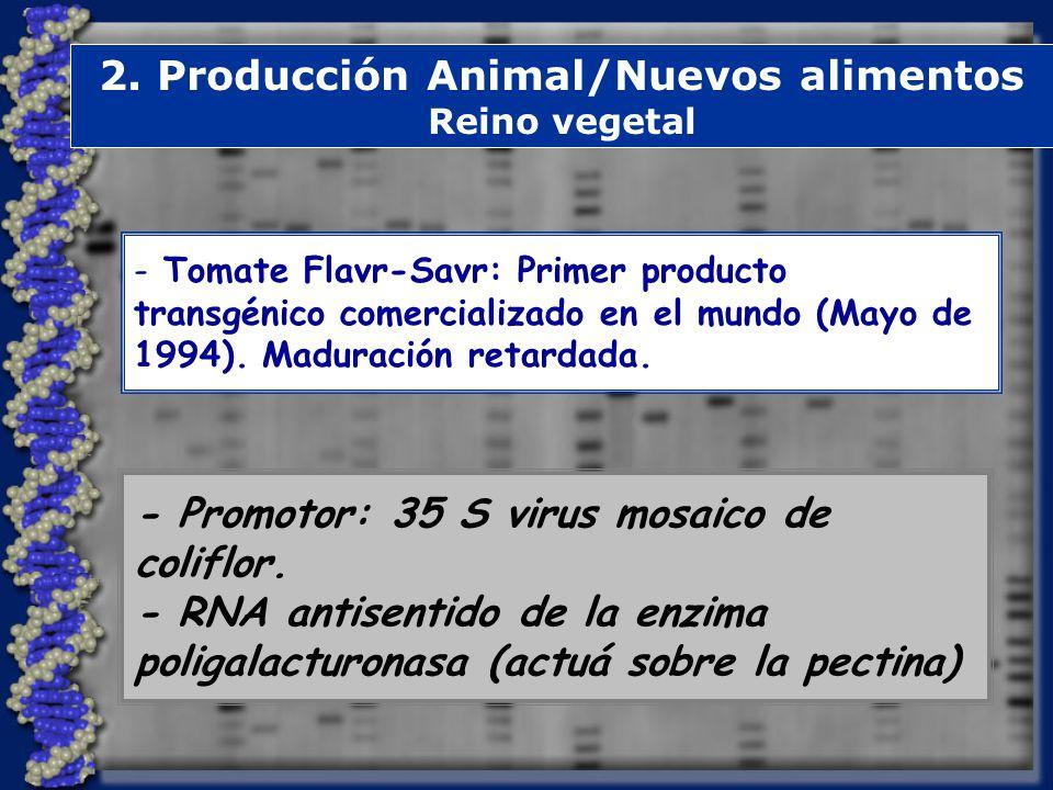 2.Producción Animal/Nuevos alimentos Reino vegetal - Promotor: 35 S virus mosaico de coliflor.