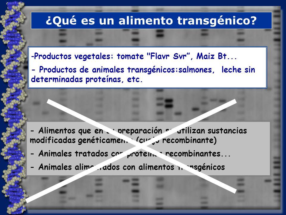 ¿Qué es un alimento transgénico.-Productos vegetales: tomate Flavr Svr, Maiz Bt...