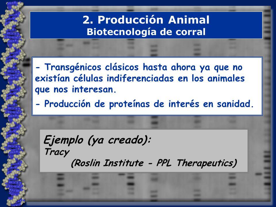 2. Producción Animal Biotecnología de corral - Transgénicos clásicos hasta ahora ya que no existían células indiferenciadas en los animales que nos in