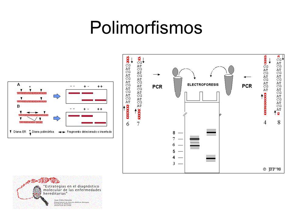 Polimorfismos