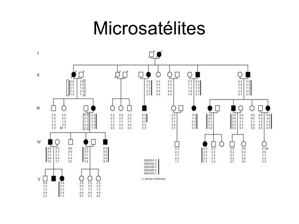 Microsatélites