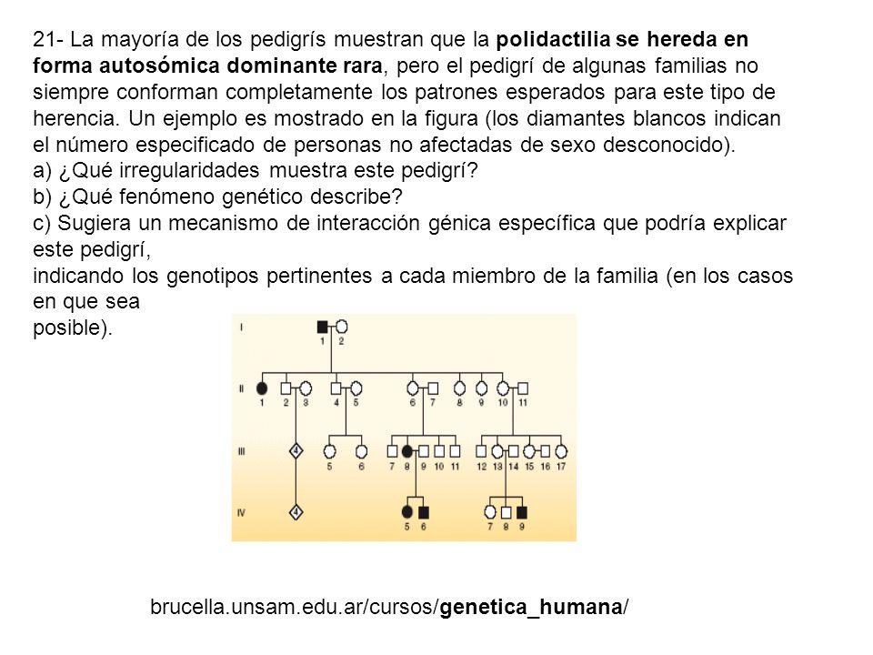21- La mayoría de los pedigrís muestran que la polidactilia se hereda en forma autosómica dominante rara, pero el pedigrí de algunas familias no siemp