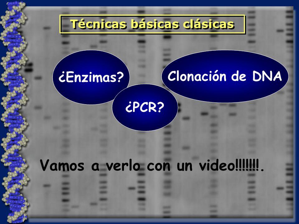 ¿Enzimas? Clonación de DNA Técnicas básicas clásicas ¿PCR? Vamos a verlo con un video!!!!!!!.