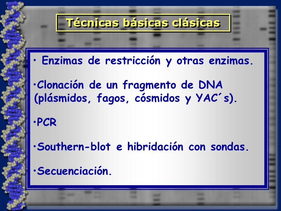 Enzimas de restricción y otras enzimas. Clonación de un fragmento de DNA (plásmidos, fagos, cósmidos y YAC´s). PCR Southern-blot e hibridación con son