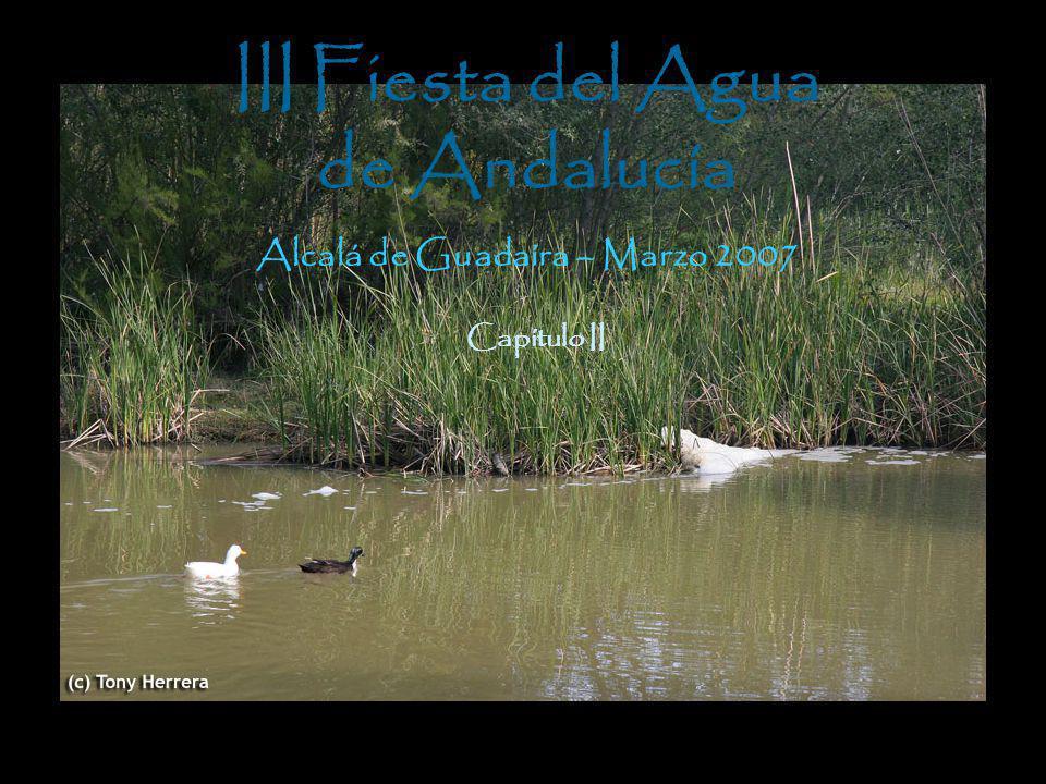 III Fiesta del Agua de Andalucía Alcalá de Guadaíra – Marzo 2007 Capítulo II