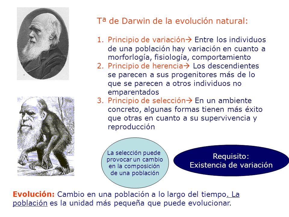 Tª de Darwin de la evolución natural: 1.Principio de variación Entre los individuos de una población hay variación en cuanto a morforlogía, fisiología, comportamiento 2.Principio de herencia Los descendientes se parecen a sus progenitores más de lo que se parecen a otros individuos no emparentados 3.Principio de selección En un ambiente concreto, algunas formas tienen más éxito que otras en cuanto a su supervivencia y reproducción La selección puede provocar un cambio en la composición de una población Requisito: Existencia de variación Evolución: Cambio en una población a lo largo del tiempo.