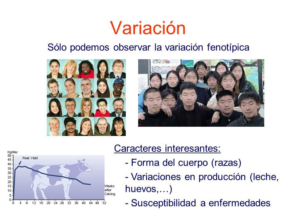 Variación Sólo podemos observar la variación fenotípica Caracteres interesantes: - Forma del cuerpo (razas) - Variaciones en producción (leche, huevos,…) - Susceptibilidad a enfermedades