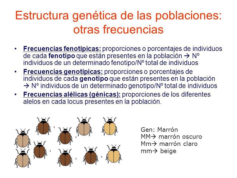Estructura genética de las poblaciones: otras frecuencias Frecuencias fenotípicas: proporciones o porcentajes de individuos de cada fenotipo que están presentes en la población Nº individuos de un determinado fenotipo/Nº total de individuos Frecuencias genotípicas: proporciones o porcentajes de individuos de cada genotipo que están presentes en la población Nº individuos de un determinado genotipo/Nº total de individuos Frecuencias alélicas (génicas): proporciones de los diferentes alelos en cada locus presentes en la población.