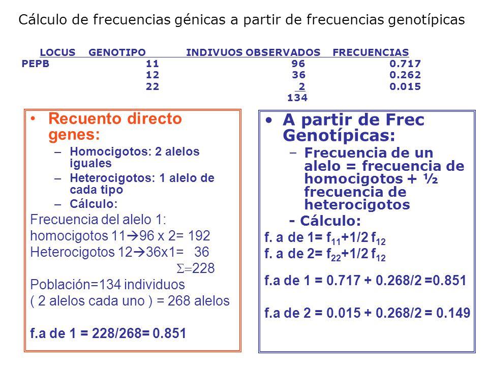 A partir de Frec Genotípicas: –Frecuencia de un alelo = frecuencia de homocigotos + ½ frecuencia de heterocigotos - Cálculo: f.