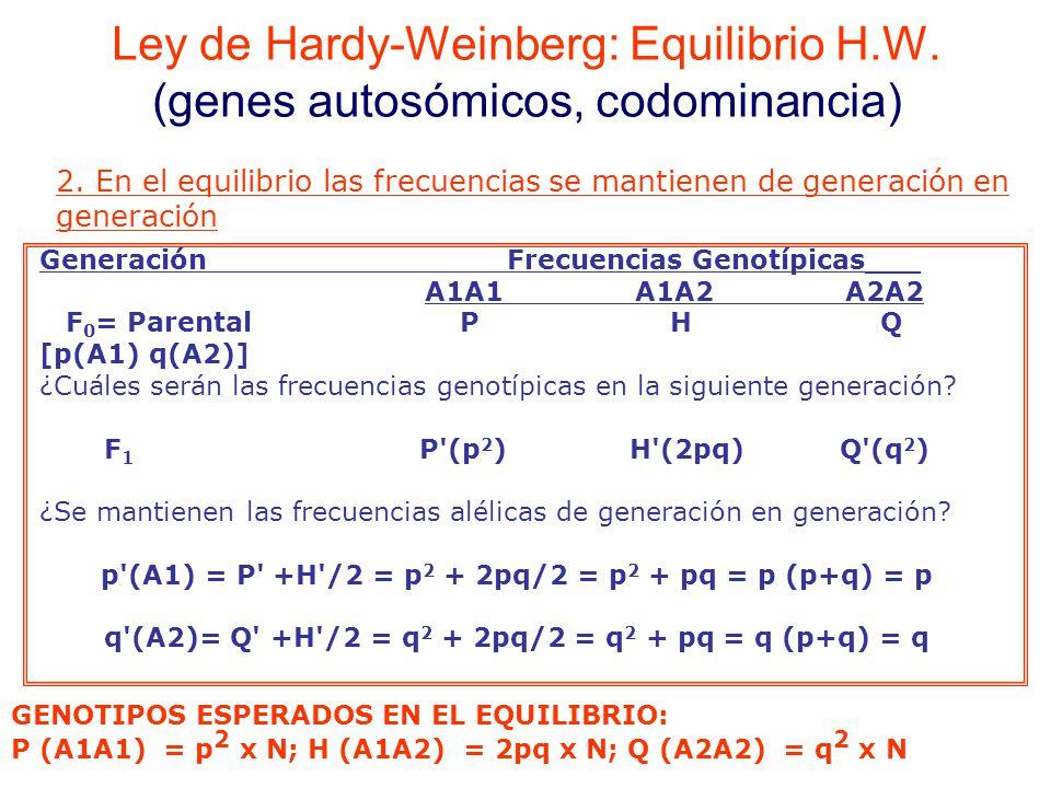 Generación Frecuencias Genotípicas___ A1A1A1A2A2A2 F 0 = Parental PHQ [p(A1) q(A2)] ¿Cuáles serán las frecuencias genotípicas en la siguiente generación.