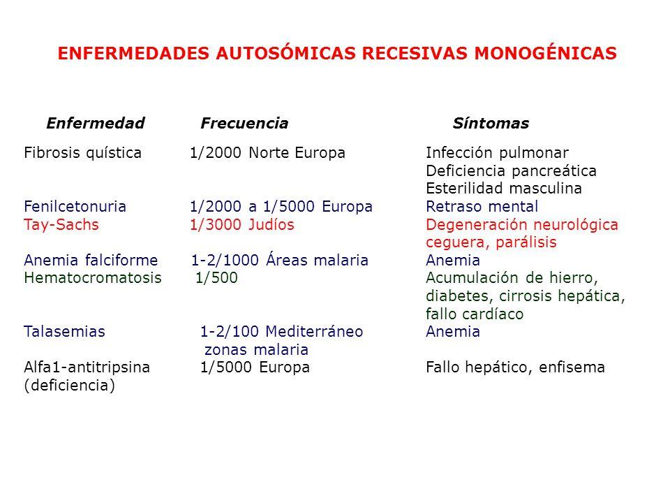 ENFERMEDADES AUTOSÓMICAS RECESIVAS MONOGÉNICAS Fibrosis quística 1/2000 Norte Europa Infección pulmonar Deficiencia pancreática Esterilidad masculina Fenilcetonuria 1/2000 a 1/5000 Europa Retraso mental Tay-Sachs 1/3000 Judíos Degeneración neurológica ceguera, parálisis Anemia falciforme 1-2/1000 Áreas malaria Anemia Hematocromatosis 1/500 Acumulación de hierro, diabetes, cirrosis hepática, fallo cardíaco Talasemias 1-2/100 Mediterráneo Anemia zonas malaria Alfa1-antitripsina 1/5000 Europa Fallo hepático, enfisema (deficiencia) Enfermedad Frecuencia Síntomas