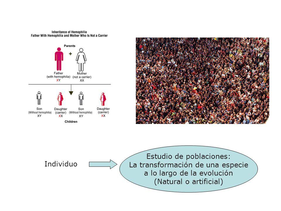Individuo Estudio de poblaciones: La transformación de una especie a lo largo de la evolución (Natural o artificial)