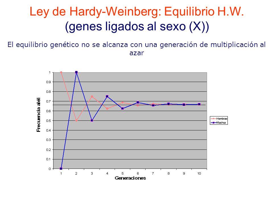 El equilibrio genético no se alcanza con una generación de multiplicación al azar Ley de Hardy-Weinberg: Equilibrio H.W.