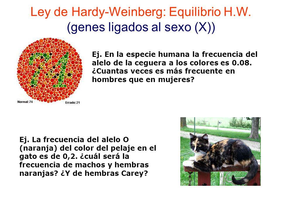 Ley de Hardy-Weinberg: Equilibrio H.W.(genes ligados al sexo (X)) Ej.