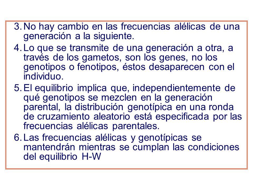 3.No hay cambio en las frecuencias alélicas de una generación a la siguiente.