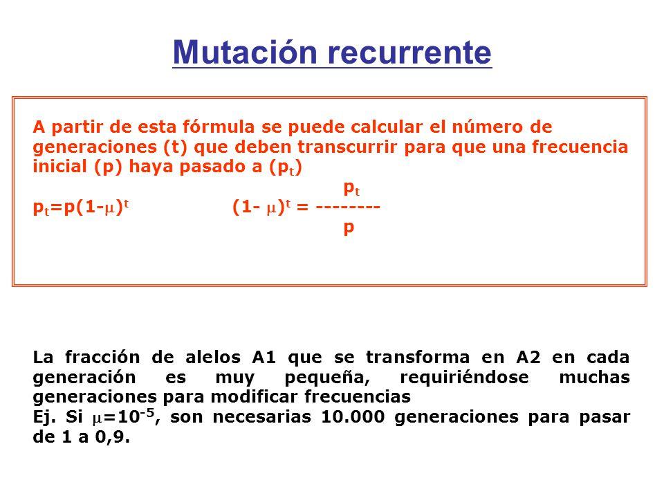 Mutación recurrente A partir de esta fórmula se puede calcular el número de generaciones (t) que deben transcurrir para que una frecuencia inicial (p) haya pasado a (p t ) p t p t =p(1-) t (1- ) t = -------- p La fracción de alelos A1 que se transforma en A2 en cada generación es muy pequeña, requiriéndose muchas generaciones para modificar frecuencias Ej.