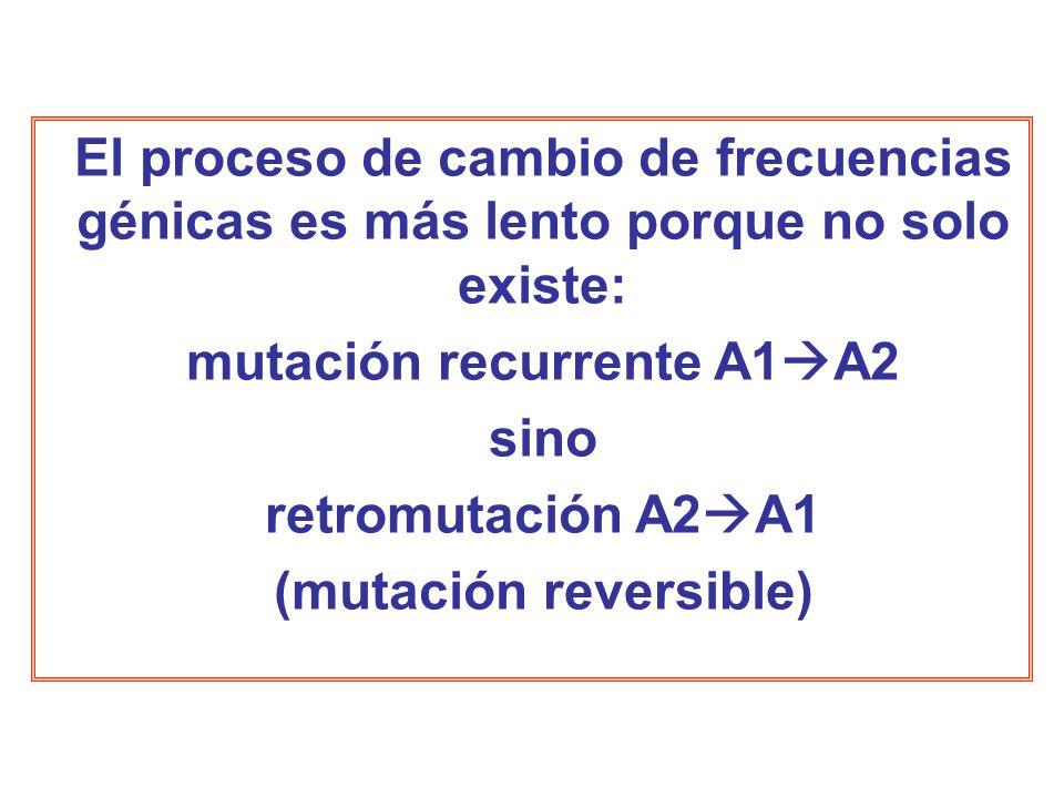 El proceso de cambio de frecuencias génicas es más lento porque no solo existe: mutación recurrente A1 A2 sino retromutación A2 A1 (mutación reversible)