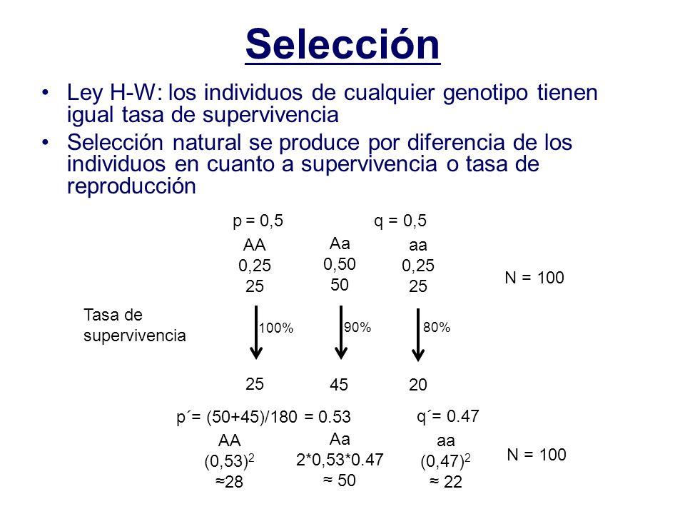 Selección Ley H-W: los individuos de cualquier genotipo tienen igual tasa de supervivencia Selección natural se produce por diferencia de los individuos en cuanto a supervivencia o tasa de reproducción p = 0,5q = 0,5 AA 0,25 25 Aa 0,50 50 aa 0,25 25 N = 100 Tasa de supervivencia 100% 90%80% 25 4520 p´= (50+45)/180 = 0.53 q´= 0.47 AA (0,53) 2 28 Aa 2*0,53*0.47 50 aa (0,47) 2 22 N = 100