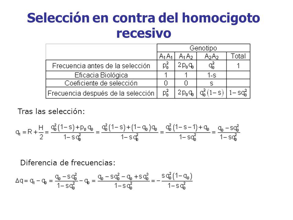 Selección en contra del homocigoto recesivo Tras las selección: Diferencia de frecuencias: