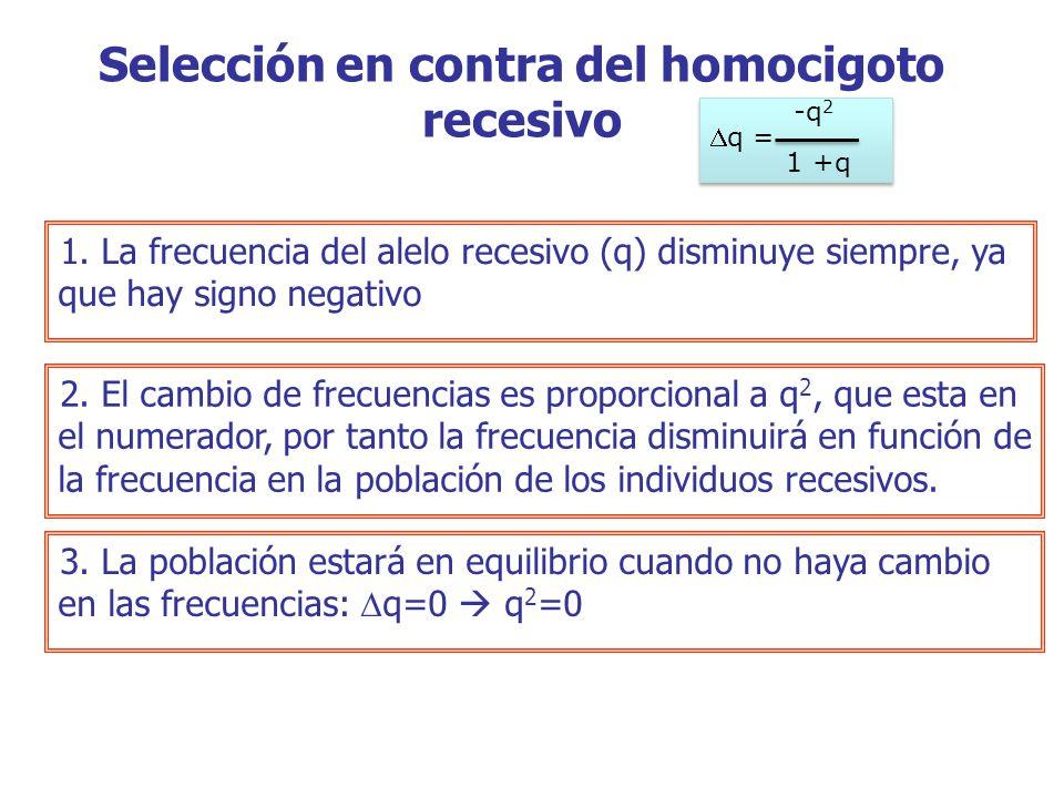 1.La frecuencia del alelo recesivo (q) disminuye siempre, ya que hay signo negativo 2.