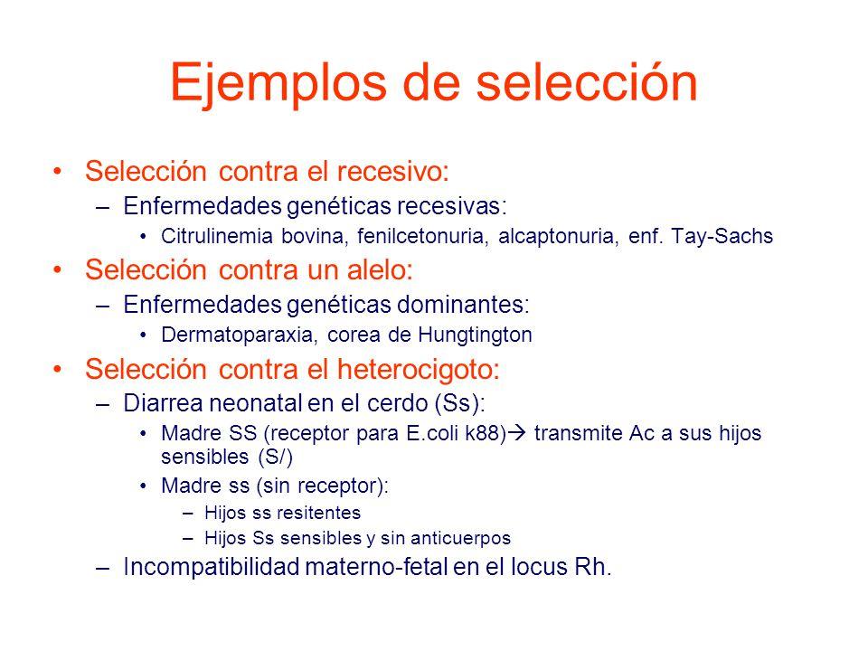 Ejemplos de selección Selección contra el recesivo: –Enfermedades genéticas recesivas: Citrulinemia bovina, fenilcetonuria, alcaptonuria, enf.