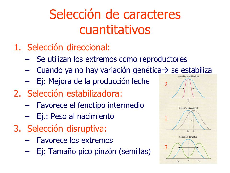 1.Selección direccional: –Se utilizan los extremos como reproductores –Cuando ya no hay variación genética se estabiliza –Ej: Mejora de la producción leche 2.Selección estabilizadora: –Favorece el fenotipo intermedio –Ej.: Peso al nacimiento 3.Selección disruptiva: –Favorece los extremos –Ej: Tamaño pico pinzón (semillas) 2 1 3