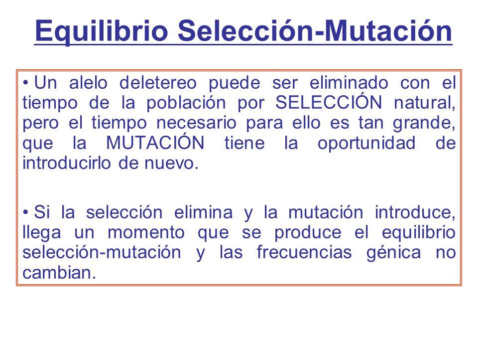 Equilibrio Selección-Mutación Un alelo deletereo puede ser eliminado con el tiempo de la población por SELECCIÓN natural, pero el tiempo necesario para ello es tan grande, que la MUTACIÓN tiene la oportunidad de introducirlo de nuevo.