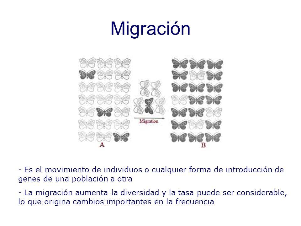 Migración - Es el movimiento de individuos o cualquier forma de introducción de genes de una población a otra - La migración aumenta la diversidad y la tasa puede ser considerable, lo que origina cambios importantes en la frecuencia