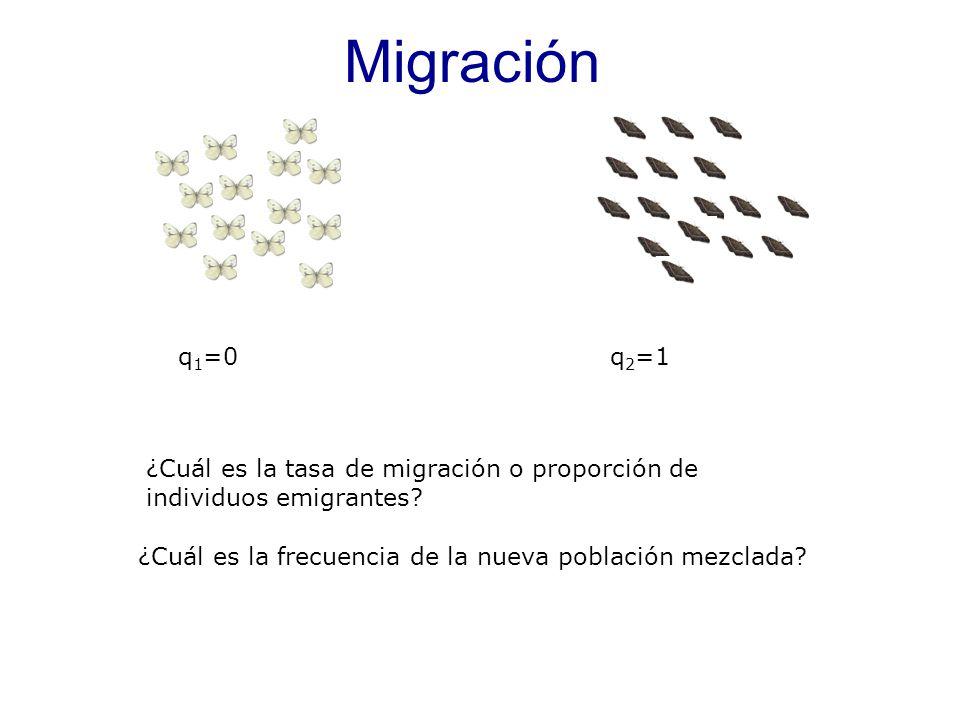 q 1 =0q 2 =1 ¿Cuál es la frecuencia de la nueva población mezclada.