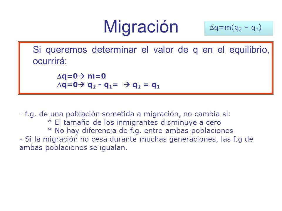 Si queremos determinar el valor de q en el equilibrio, ocurrirá: q=0 m=0 q=0 q 2 - q 1 = q 2 = q 1 - f.g.