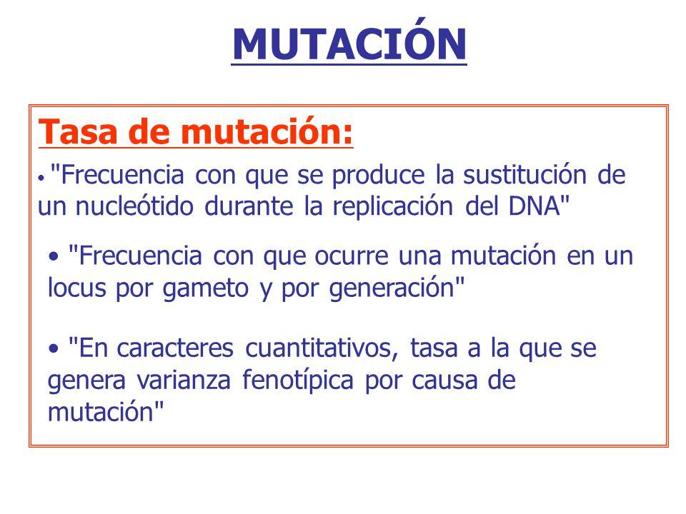 MUTACIÓN Tasa de mutación: Frecuencia con que se produce la sustitución de un nucleótido durante la replicación del DNA Frecuencia con que ocurre una mutación en un locus por gameto y por generación En caracteres cuantitativos, tasa a la que se genera varianza fenotípica por causa de mutación