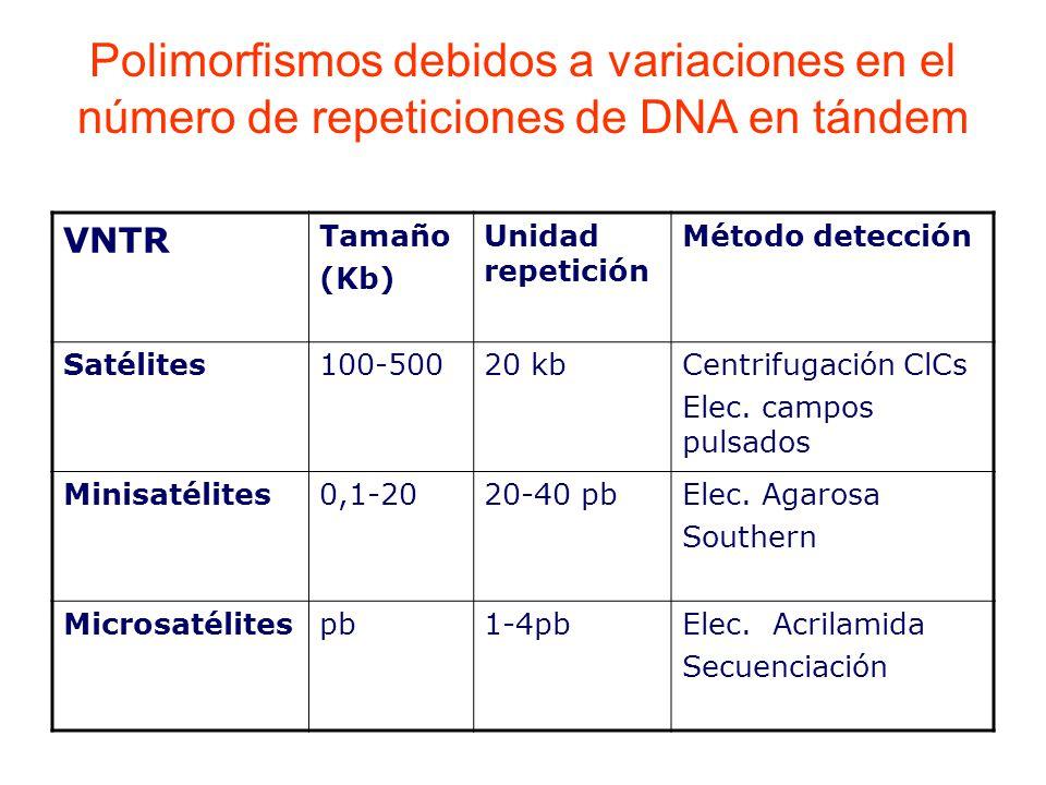 VNTR Tamaño (Kb) Unidad repetición Método detección Satélites100-50020 kbCentrifugación ClCs Elec.