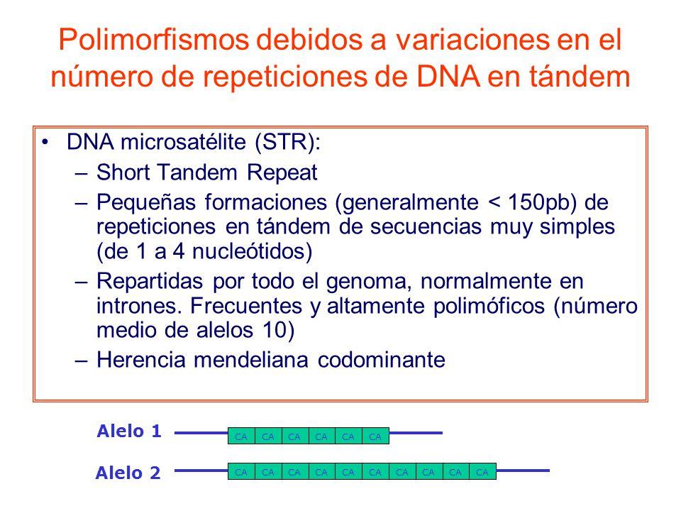 DNA microsatélite (STR): –Short Tandem Repeat –Pequeñas formaciones (generalmente < 150pb) de repeticiones en tándem de secuencias muy simples (de 1 a 4 nucleótidos) –Repartidas por todo el genoma, normalmente en intrones.