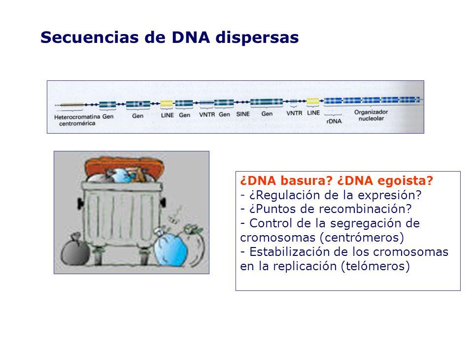 Secuencias de DNA dispersas ¿DNA basura.¿DNA egoista.
