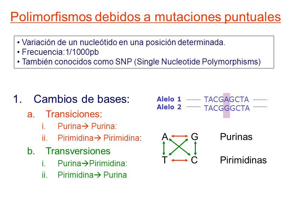Variación de un nucleótido en una posición determinada.