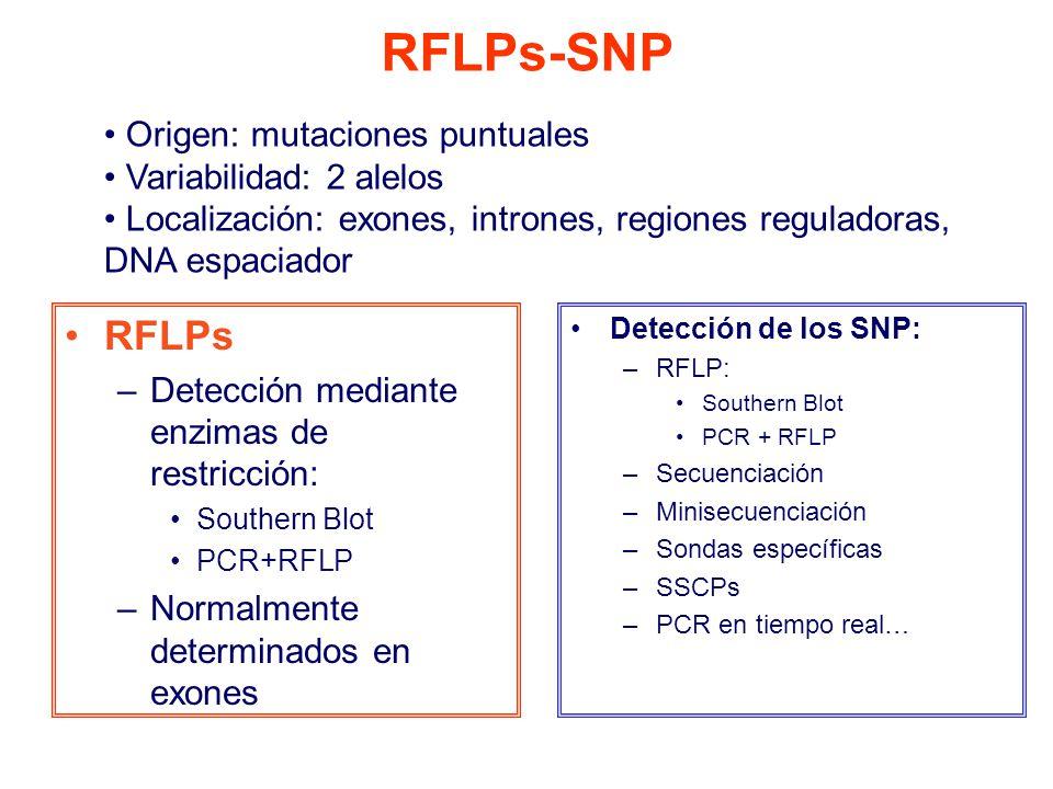 Detección de los SNP: –RFLP: Southern Blot PCR + RFLP –Secuenciación –Minisecuenciación –Sondas específicas –SSCPs –PCR en tiempo real… RFLPs –Detección mediante enzimas de restricción: Southern Blot PCR+RFLP –Normalmente determinados en exones RFLPs-SNP Origen: mutaciones puntuales Variabilidad: 2 alelos Localización: exones, intrones, regiones reguladoras, DNA espaciador
