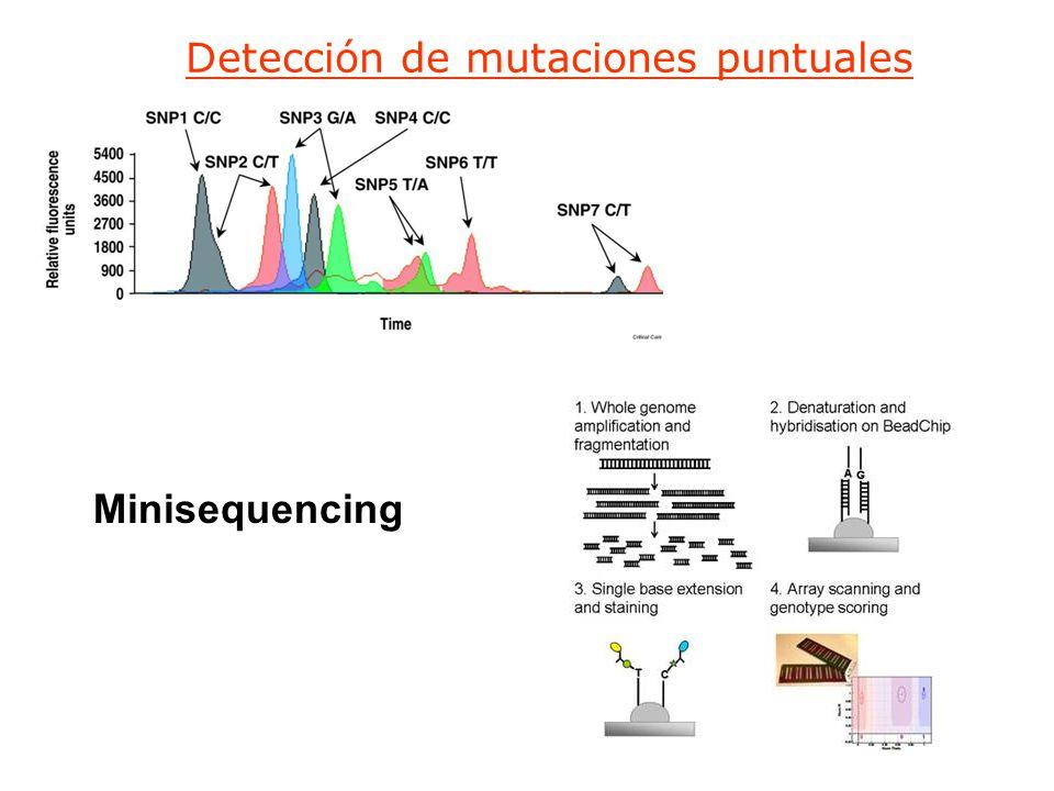 Detección de mutaciones puntuales Minisequencing
