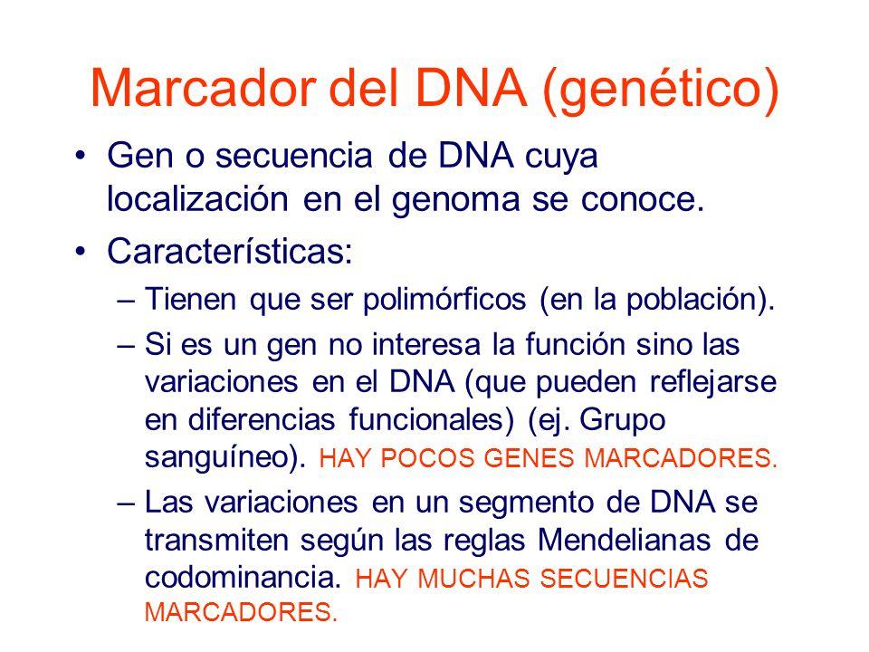 Marcador del DNA (genético) Gen o secuencia de DNA cuya localización en el genoma se conoce.