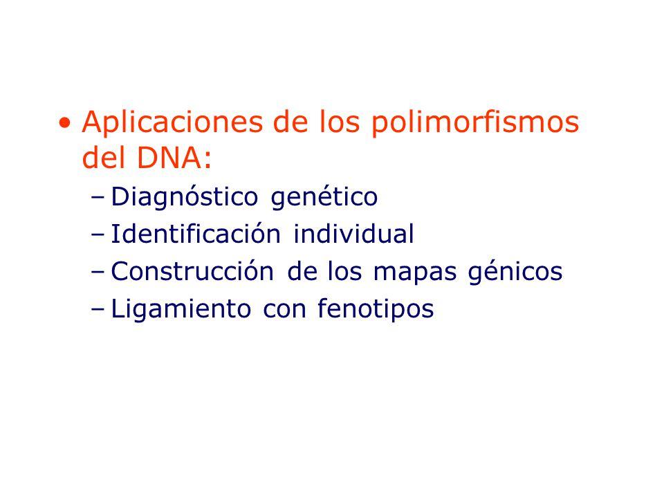 Aplicaciones de los polimorfismos del DNA: –Diagnóstico genético –Identificación individual –Construcción de los mapas génicos –Ligamiento con fenotipos