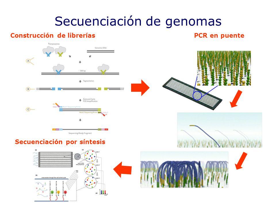 Secuenciación de genomas Construcción de libreríasPCR en puente Secuenciación por síntesis