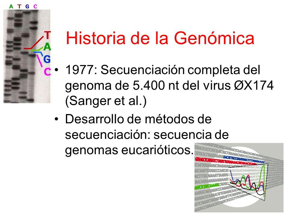 Historia de la Genómica 1977: Secuenciación completa del genoma de 5.400 nt del virus ØX174 (Sanger et al.) Desarrollo de métodos de secuenciación: secuencia de genomas eucarióticos.