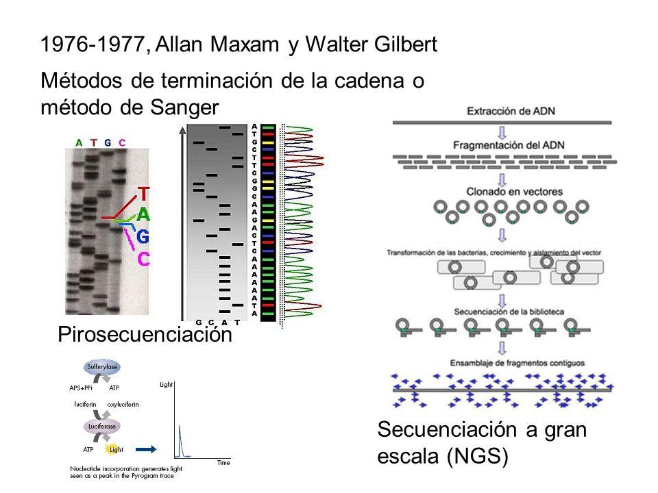 1976-1977, Allan Maxam y Walter Gilbert Métodos de terminación de la cadena o método de Sanger Pirosecuenciación Secuenciación a gran escala (NGS)